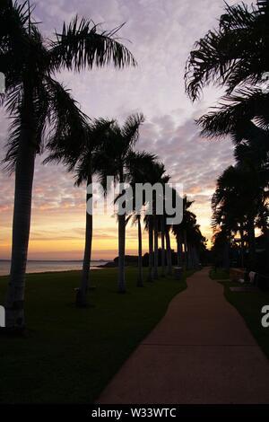 Sentier bordé de palmiers avec des silhouettes contre un ciel Aube