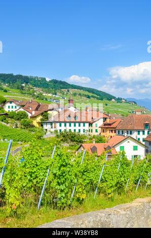 Rivaz Suisse Europe Canton De Vaud Lavaux Vignoble