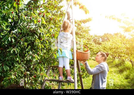Cute Girl Picking cerises avec sa mère dans le jardin Banque D'Images