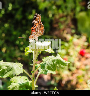 La photo en gros plan d'un papillon coloré assis sur une feuille. Banque D'Images