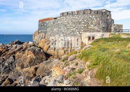 Sea thrift ou rose de la mer sur la côte à côté de Fort Doyle - construit au début du 19ème C comme protection contre une invasion française., Fontenelle Bay, Guernsey, Royaume-Uni