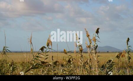 Albufera, dans le nord de Majorque, Iles Baléares, Espagne. La Méditerranée nature park est un sanctuaire d'oiseaux de marais et roselières. Banque D'Images