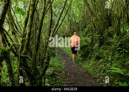 Male hiker avec sac à dos orange marche sur un chemin dans une épaisse forêt verte trail dans les Pyrénées Banque D'Images