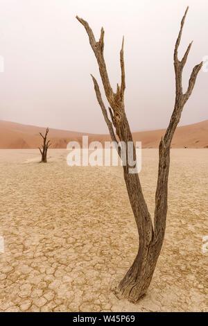 Arbre mort et de dunes de sable rouge à Deadvlei, Namib-Naukluft National Park, Namibie Banque D'Images