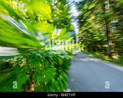La campagne de la forêt verte de vitesse sur route Banque D'Images