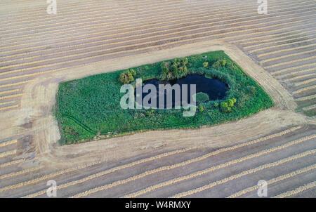 Petersdorf, Allemagne. 24 juillet, 2019. Un petit lac, entouré de vertes prairies, peut être vu au milieu d'un champ de céréales récoltées, où la paille se trouve comme un couloir (photographie aérienne avec un bourdon). Un andain est le nom donné à la paille se trouvant dans les lignes après la moisson, qui est ensuite pressée dans les rouleaux ou des balles. Crédit: Patrick Pleul/dpa-Zentralbild/ZB/dpa/Alamy Live News Banque D'Images
