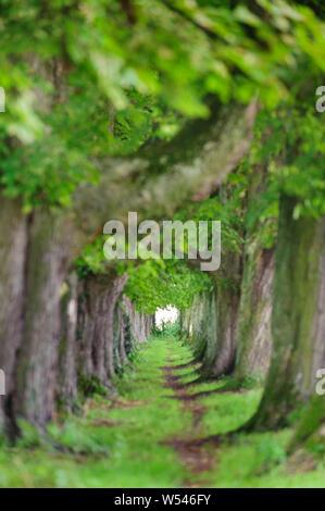 Allée bordée d'un sentier avec en moyen