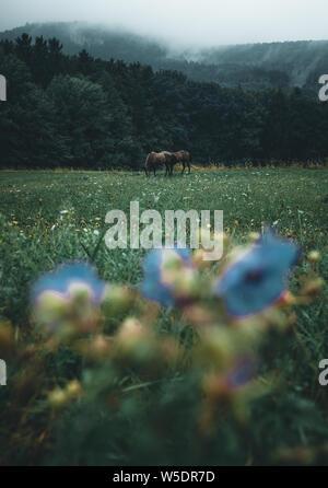 Cheval dans un brouillard matinal sur un moody champ d'herbe d'automne en Autriche Banque D'Images