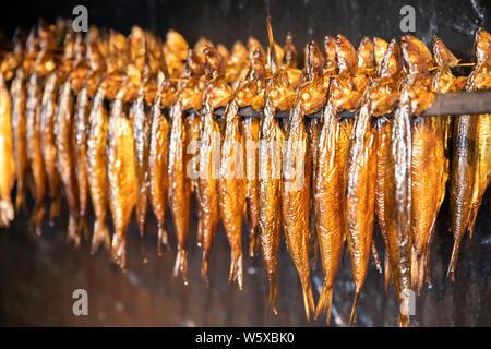 Être fumés harengs à la Hasle Rogeri smokehouse, Hasle, Bornholm, la mer Baltique, Danemark, Europe Banque D'Images
