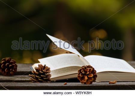 Cônes de pin sur la table rouillée et un livre ouvert en arrière-plan Banque D'Images