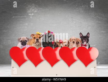 Groupe de chiens adorables célébration de la Saint-Valentin sur un fort contre l'arrière-plan gris, avec rangée de gros cœurs rouges en face d'eux Banque D'Images