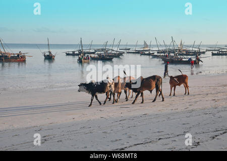 Plages de Zanzibar en Tanzanie, l'Afrique avec les bateaux de pêche et tourisme Banque D'Images