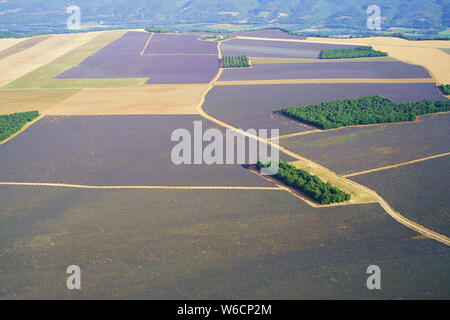 Oliviers et de champs de lavande et de BLÉ SUR LE BORD NORD DE LA Plateau de Valensole (vue aérienne). Puimoisson, Provence, France.