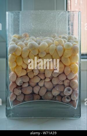 Vase en verre rectangulaire poussiéreuse remplie de petits coquillages marron et jaune, assis sur un rebord de la salle de bains.