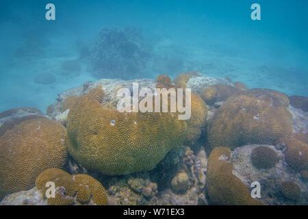 Coraux Ningaloo Reef à la vie marine à Coral Bay à l'ouest de l'Australie Banque D'Images