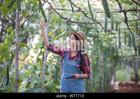 Les femmes Asias ingénieur agronome et agriculteur en utilisant la technologie de l'inspection dans l'agriculture et le champ de légumes biologiques