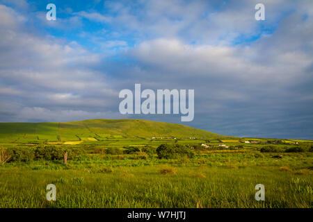 Champs verts sur la péninsule de Dingle, Co Kerry, Ireland Banque D'Images