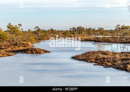 Nature Paysage avec marais glacé frosty avec sol, de la glace sur le lac de marais et la végétation des tourbières pauvres - froid Moor et de couleur d'automne de la flore de la tourbe d'hiver b