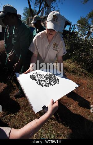La prise de l'empreinte de l'éléphant sauvage, (Loxodonta africana), après une vasectomie intervention à l'aide de micromanipulation chirurgicale dans la brousse. Private Game Reserve au Limpopo, Afrique du Sud. Christine Hardy, de la gestion de la population d'éléphants est directeur des opérations de la Colorado State University Animal Cancer Centre. Avril 2011 Banque D'Images