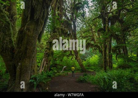 C'est la photo de forêt humide au Hall de mousses à l'Olympic National Park Washington