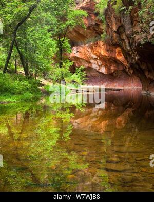 Oak Creek Canyon, West Fork Trail, près de Sedona, Arizona, USA. Juillet 2010.