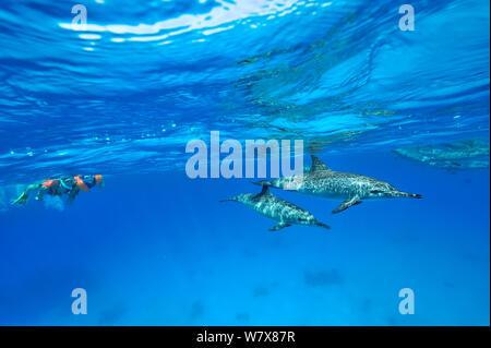 Jeune garçon et un adulte tuba sur la surface au-dessus d'un groupe de dauphins (Stenella longirostris) L'Égypte. Mer Rouge. Juin 2010. Banque D'Images