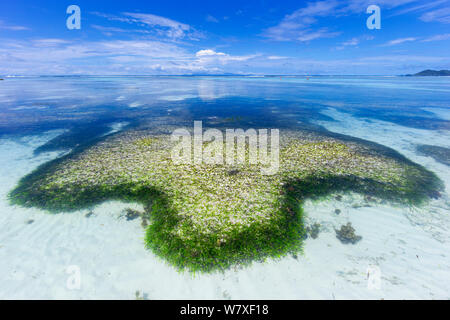 Les formations de roche dans l'eau claire sur Anse Source d&#39;Argent beach. L'île de La Digue, aux Seychelles. Octobre, 2012. Banque D'Images