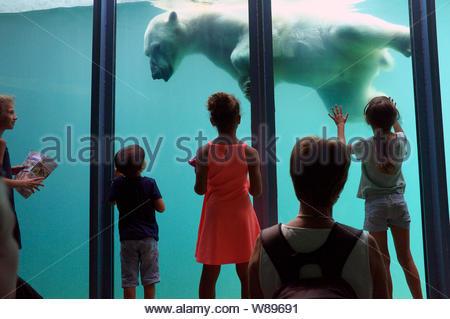 Les enfants s'émerveiller devant l'ours nager sous l'eau dans son boîtier. Zoo de Budapest, Hongrie. Banque D'Images