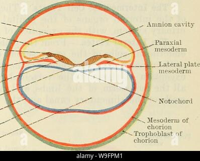 Image d'archive à partir de la page 62 du texte de Cunningham-livre d'anatomie (1914). Cunningham's Text-book d'anatomie cunninghamstextb00cunn Année: 1914 ( âMesoderm âEctoderm d'amnios â â de l'amnios - toit de la crête neurale de la paroi latérale de la plaque de marbre-groove neural de mésoblaste' entoderm Entoderm vésicule' cavité d'entoderm l'amnion vésicule notochorde cavité mésodermique de chorion trophoblastique de chorion cochon. 41. A. La section transversale d'un zygote, montrant les éléments constitutifs. Schéma de la zone B. embryonnaires montrant certaines parties de la plaque neurale et la ligne primitive. La portion apicale du somite mésodermiques creux je Banque D'Images