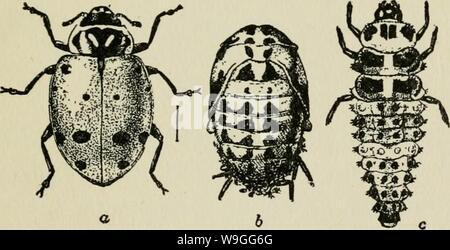 Image d'archive à partir de la page 220 de la culture et de maladies Banque D'Images