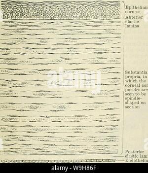Image d'archive à partir de la page 842 de Cunningham's Text-book d'anatomie (1914). Cunningham's Text-book d'anatomie cunninghamstextb00cunn Année: 1914 chambre postérieure ( Ciliarv- processus muscl ciliaire Fig. 679. Section d'une partie de l'ampoule de l'oeil montrant le sillon Cieculaeis. Angle est d'environ 95 mm., de sa partie périphérique, environ 119 mm. Sa face antérieure est recouverte d'un épithélium stratifié, en continuité avec celle qui tapisse les con- junctiva; sa face postérieure est dirigé vers l'un- chambre de l'œil e résultats t et est en contact avec l'humeur aqueuse. Son degré de curva- ture Banque D'Images