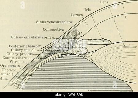 Image d'archive à partir de la page 842 de Cunningham's Text-book d'anatomie (1914). Cunningham's Text-book d'anatomie cunninghamstextb00cunn Année: 1914 ( FIBKOUS TUNIQUES DE L'ŒIL. 809 sinus veineux de la chambre antérieure circulari Sulcus ciliaire chambre postérieure muscl processus Ciliarv- Fig. 679. Section d'une partie de l'ampoule de l'oeil montrant le sillon Cieculaeis. Angle est d'environ 95 mm., de sa partie périphérique, environ 119 mm. Sa face antérieure est recouverte d'un épithélium stratifié, en continuité avec celle qui tapisse les con- junctiva; sa face postérieure est dirigé vers l'une chambe e résultats t- Banque D'Images