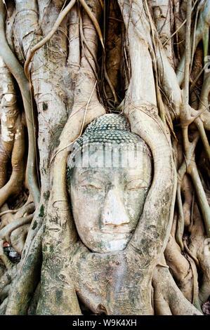 Grande tête de Bouddha en pierre dans fig tree roots, Wat Mahathat, Ayutthaya, UNESCO World Heritage Site, Thaïlande, Asie du Sud, Asie