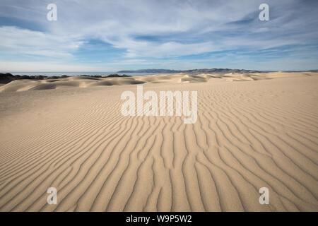 Dunes, Pismo Pismo Beach, CA. Banque D'Images