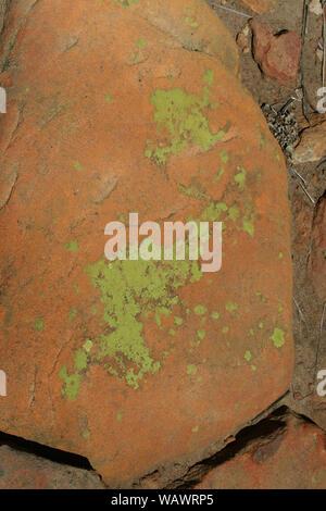 Close up de lichen sur un rocher, Village Culturel Basotho, Free State, Afrique du Sud Banque D'Images