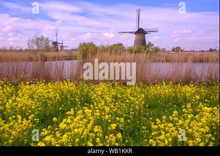 L'Europe, de l'Europe, Pays-Bas, Kinderdijk, moulin, l'UNESCO, Patrimoine Mondial, 30078089 Banque D'Images
