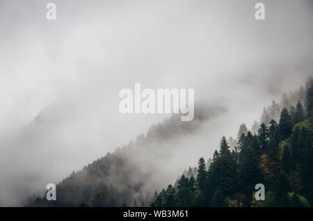 Arbres enneigés dans un brouillard nuée sur la montagne, forêt de conifères en hiver, Racha, Géorgie Banque D'Images