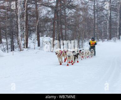 VILLAGE d'ESSO, le Kamchatka, RUSSIE - 4 mars 2019: l'exécution de l'équipe de chien de traîneau musher du Kamtchatka. Course de chiens de traîneau du Kamchatka La Béringie. Extrême-Orient russe, Kamch Banque D'Images