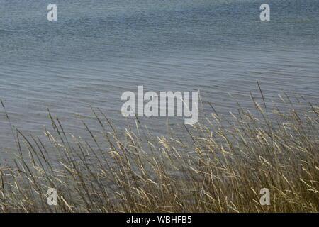 L'herbe dans les dunes de sable à côté de la plage et de la mer sur l'arrière-plan. Avec l'horizon de la mer. Dans la scène de voyage Vacances à la côte de la mer. Cliff
