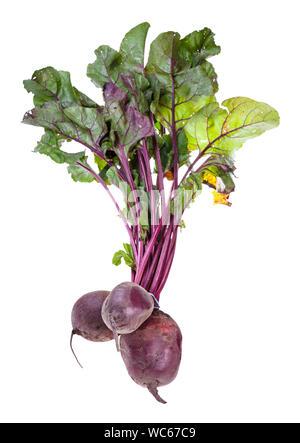 Offre groupée de produits frais bio jardin racines de betterave avec des greens isolé sur fond blanc Banque D'Images