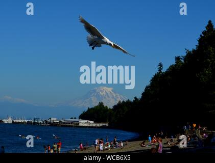 Low Angle View Of Seagull Flying Over Beach contre Ciel Bleu clair Banque D'Images