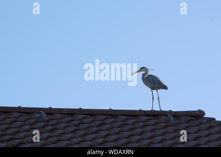 Low Angle View of Bird Perching On Roof Banque D'Images