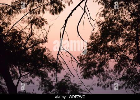 Vue des arbres dans le coucher du soleil de l'Inde Banque D'Images