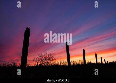 Plantes Silhouette sur terrain contre ciel dramatique pendant le coucher du soleil Banque D'Images