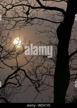 Close-up of Cropped Silhouette arbres nus contre le soleil Banque D'Images