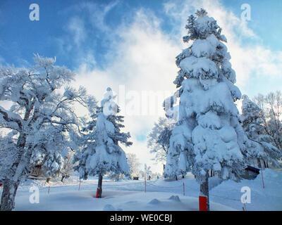 Yamagata arbres gelés des monstres de neige et des pistes de ski au mt.zao Banque D'Images