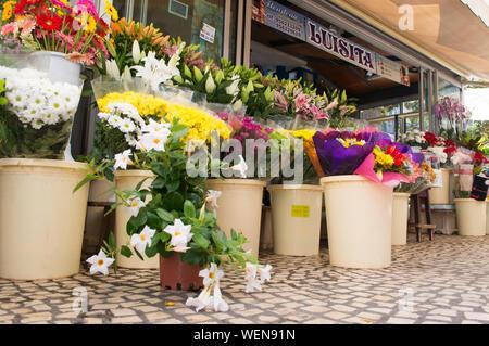 Cadix, Espagne, 2019-08-07. Flower Stand à l'un des marchés en plein air dans la zone touristique de Cadix . Banque D'Images
