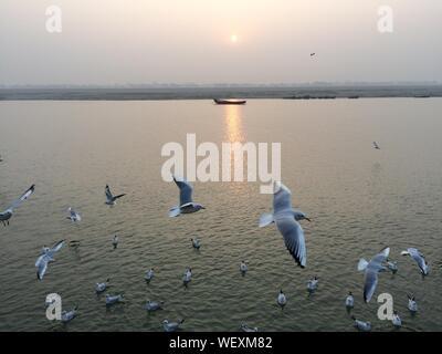Portrait de vol de mouettes au-dessus de Ganges River Banque D'Images