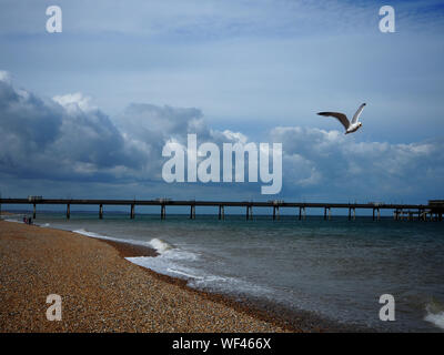 Low Angle View Of Seagull Flying Over Beach Against Cloudy Sky Banque D'Images