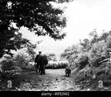 Éleveur de Swaledale dans les années 40 Banque D'Images